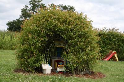 Cabane en osier